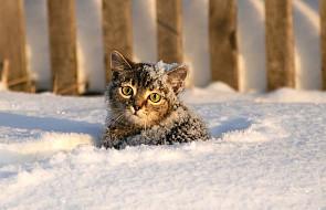 Mały kotek spowodował wybuch... dobra! Takie historie nie zdarzają się na co dzień