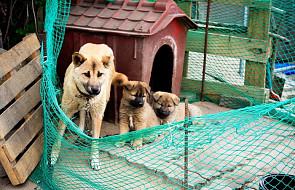 Sąd w Korei Płd.: zabijanie psów na mięso jest nielegalne
