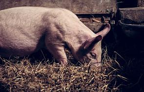 """#Ewangelia: co to znaczy """"rzucać perły przed świnie""""?"""