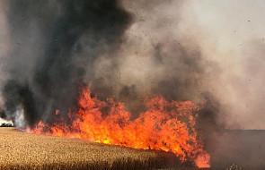 Izrael: Hamas poinformował o zawieszeniu broni w Strefie Gazy