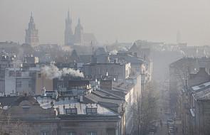 Kraków: zazielenianie dachów budynków publicznych to pomysł na więcej zieleni w mieście