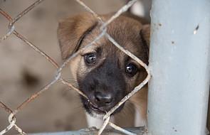 Więźniowie będą opiekować się bezdomnymi psami w schronisku