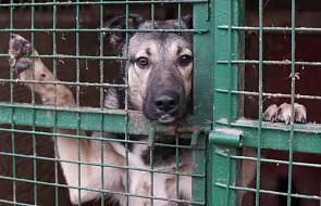 """Kalisz: bezdomni będą wyprowadzali psy ze schroniska. """"Pomagam, bo lubię"""""""