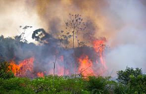 Caritas Brazylii: w 2019 r. w Amazonii wybuchło 100 tys. pożarów