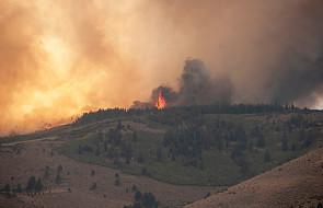 W 2018 r. rekordowo dużo krajów walczyło z pożarami lasów