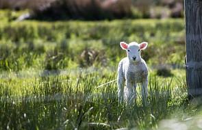 Jak wyznaczano daty Wielkanocy? Wyjaśnia ekspert