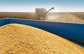 IUNG: od marca do maja wystąpiła susza rolnicza