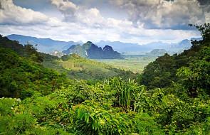 Brazylia: Amazonia straciła prawie milion hektarów terenów zielonych