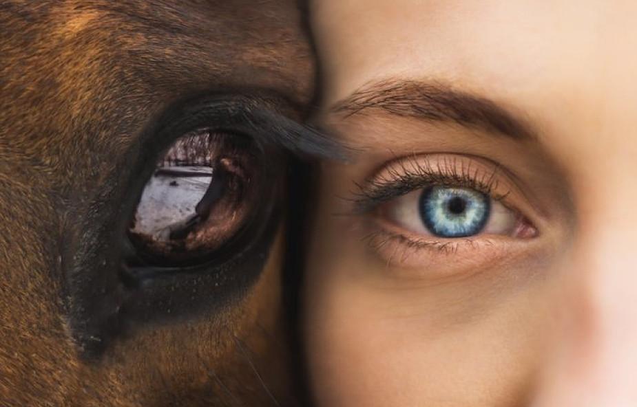 """Ekolodzy zbierają z bielszczanami makulaturę, by ratować konie. """"Razem możemy im pomóc"""""""