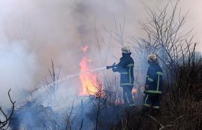 Ponad 5,3 tys. pożarów w Polsce od początku roku. Powodem coraz wyższe temperatury