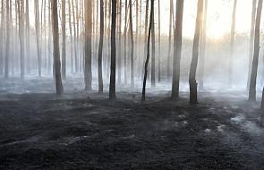 Strażacy: wzrasta zagrożenie pożarowe w lasach; w czwartek - 129 pożarów
