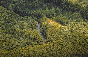 Brazylia: wylesianie Amazonii postępuje w najszybszym od lat tempie. Prezydent zaatakował instytut za publikację danych