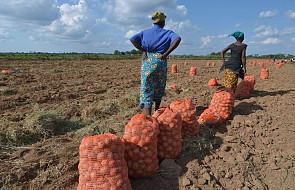 Apel o pomoc dla Zambii dotkniętej brakiem żywności