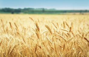 Ardanowski: rolnicy dostaną pomoc w związku z suszą