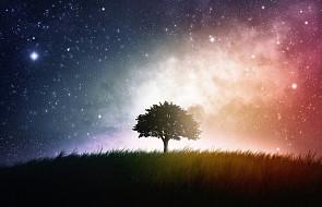 Na niebie rozbłysną dziś gwiazdy!