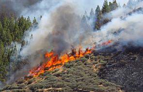 Hiszpania: około tysiąca hektarów lasów spłonęło na wyspie Gran Canaria