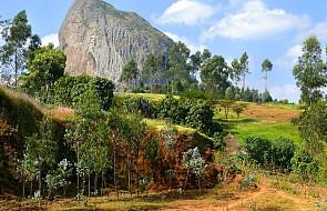 Etiopia: posadzono ponad 350 mln drzew