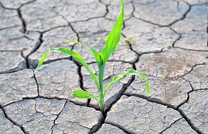 Ardanowski: susza dotknęła już 175 tys. gospodarstw
