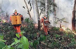 Patriarcha Bartłomiej: pożary lasów zagrażają ekosystemowi świata