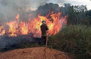 Jeden z biskupów o Amazonii: będziemy walczyć wszystkimi dostępnymi środkami