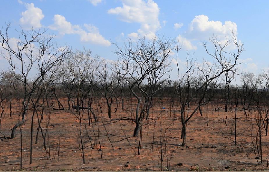 Kościół Ameryki Południowej apeluje o podjęcie zdecydowanych kroków w walce z pożarami lasów