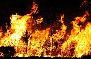 Tak, pożary w Australii to konsekwencja grzechu