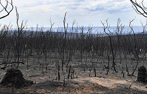 Boty i internetowe trolle rozpowszechniają nieprawdziwe informacje o pożarach w Australii