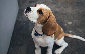 """Czy znajdzie się dom dla tego psa? W kościele wierni będą mogli poznać """"psiaka bezdomniaka"""""""