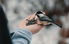 Jak mądrze dokarmiać ptaki zimą?