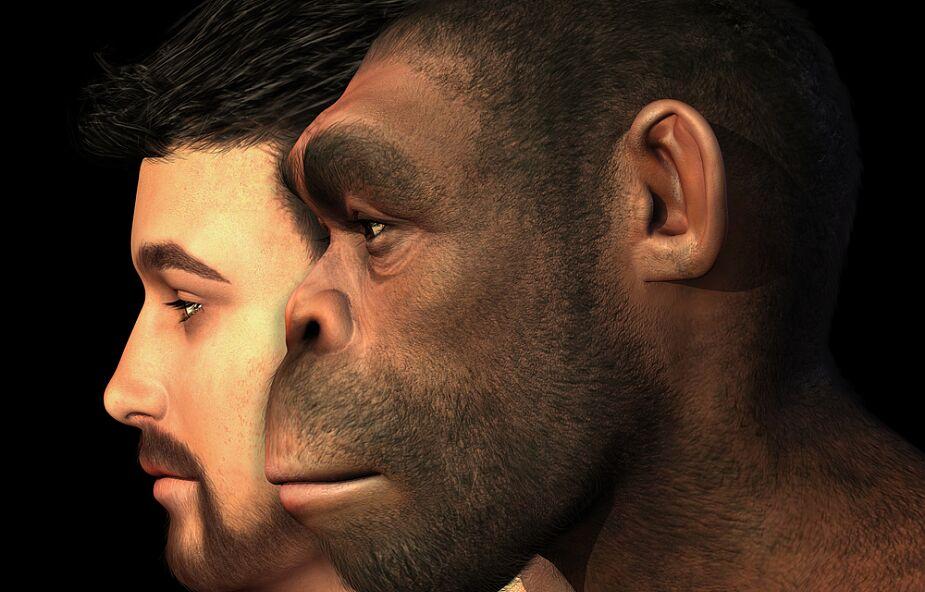 Odkryto gen neandertalczyka chroniący przed ciężkim przebiegiem COVID-19