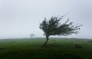 IMGW: ostrzeżenia przed silnym wiatrem na południu i południowym zachodzie Polski