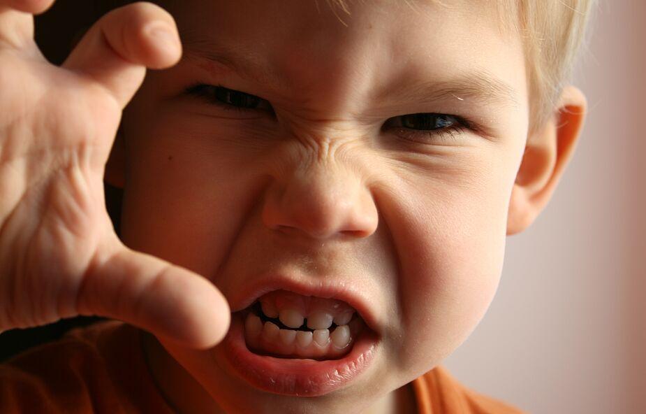 Rodzice cholerycznego dziecka powinni przygotować się na walkę o władzę