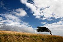 IMGW: drugi stopień zagrożenia o silnym wietrze dla 10 województw