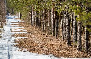 Suwałki: tak łagodnej zimy nikt nie pamięta na polskim biegunie zimna