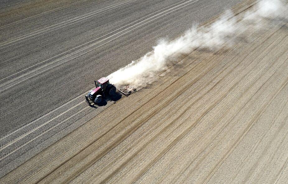 Ardanowski: susza może spowodować wzrost cen żywności