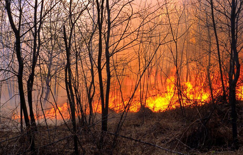 Strażacy: w weekend 1745 pożarów, w tym 244 w lasach; zginęły trzy osoby