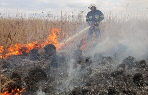 Szef MON: wojskowa Bryza oraz śmigłowce polecą nad Biebrzański Park Narodowy, by walczyć z pożarem