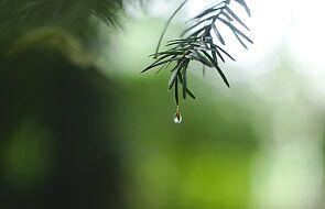 Biskupi apelują o modlitwę błagalną o deszcz oraz o oszczędzanie wody