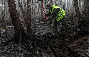 Instytut Badawczy Leśnictwa: w większości kraju najwyższe zagrożenie pożarowe