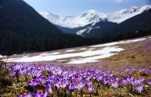 TPN: zakaz wejścia w Tatry korzystny dla przyrody