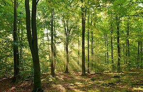 RPO: zakaz wchodzenia do lasu nie ma podstawy prawnej