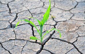 IUNG: susza rolnicza występuje w całej Polsce