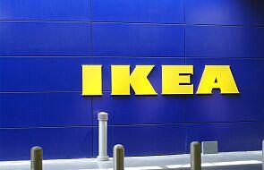 NGO: część drewna w produktach IKEA z nielegalnych wycinek na Ukrainie
