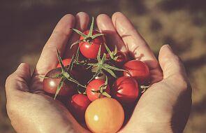 Zielona kuchnia. Dlaczego katolik może i powinien się o nią starać?