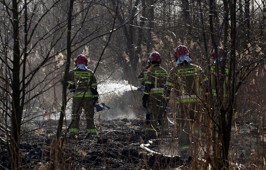 Biebrzański Park Narodowy po pożarze. Przyroda wraca do życia