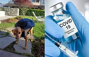 Psi kurier otrzymał nagrodę za pomoc w czasie pandemii