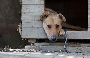 Dziś Sejm zajmie się projektem ustawy dot. ochrony zwierząt
