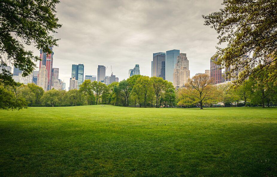Przyroda w mieście to nie tylko parki i trawniki
