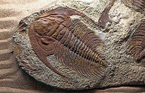 Chiny: niezwykłe odkrycie skamieliny. Może mieć nawet 435 mln lat