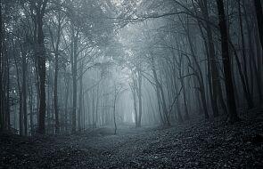 W wielkopolskim lesie znaleziono szatana